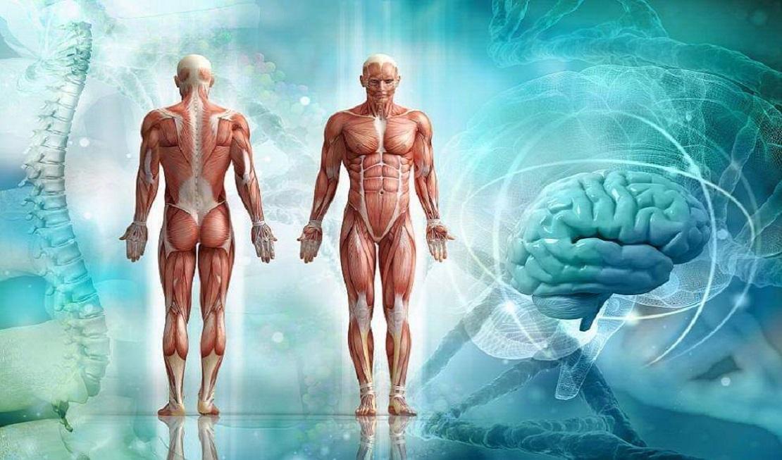 Анатомия, Йога, правилно движение